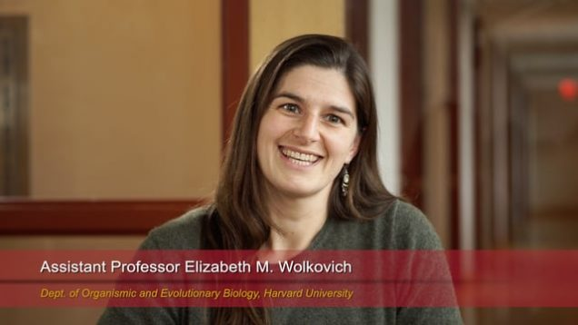 Harvard Speaks on Climate Change: Elizabeth Wolkovich